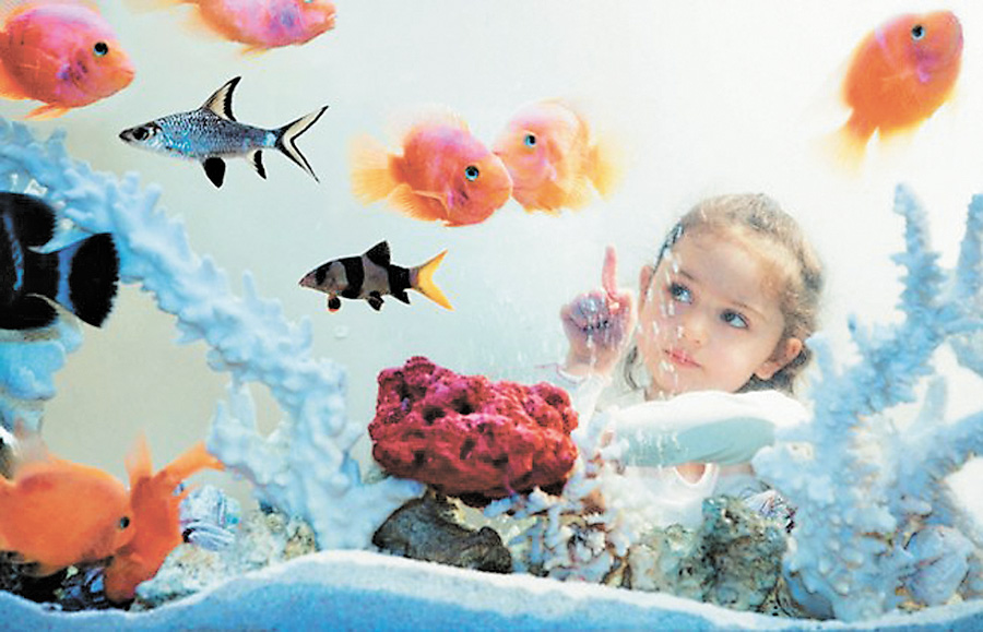Аквариумные рыбы картинки для детей 6
