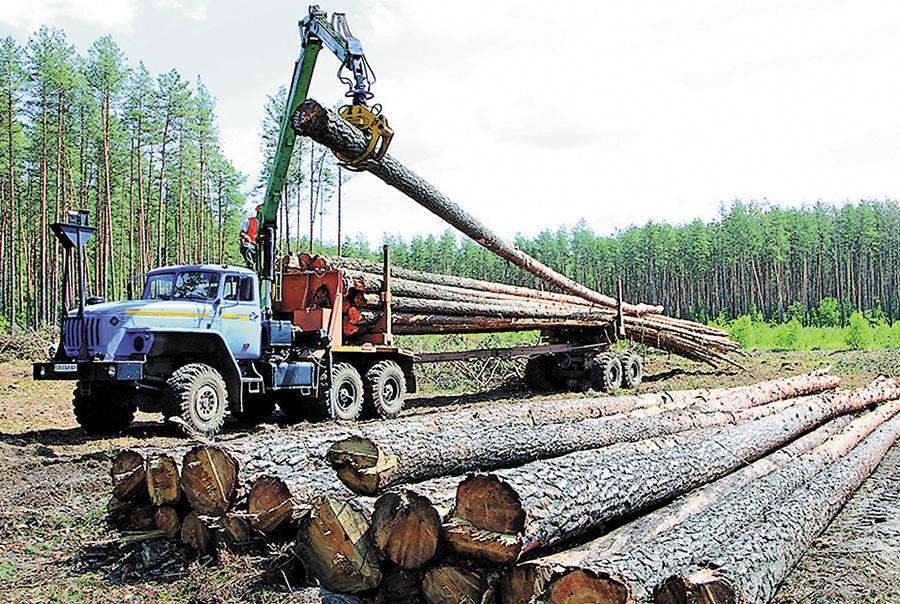 Чернігівська деревина нині має величезний попит. Фото автора