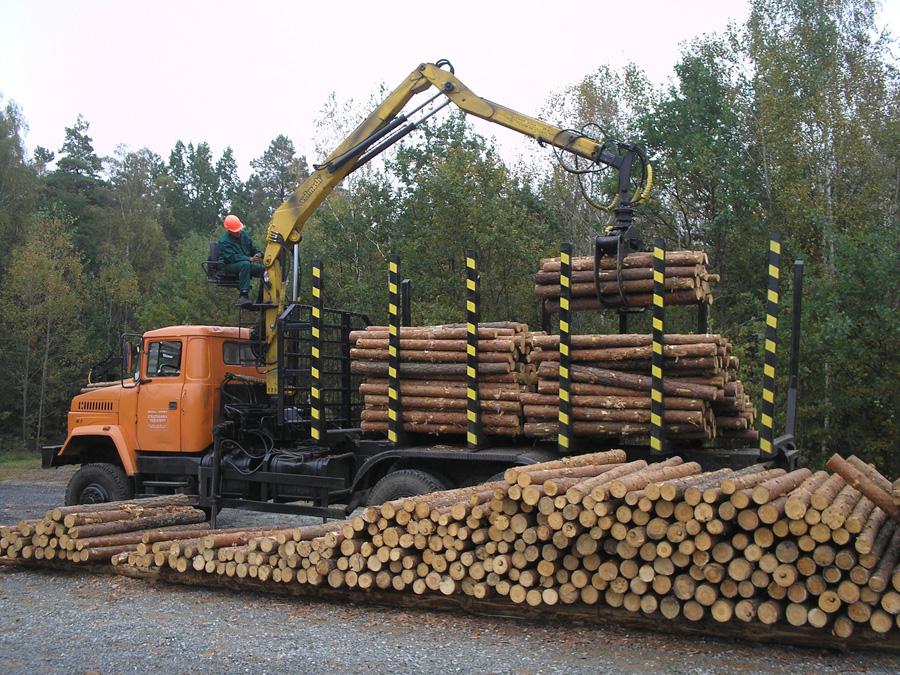 Держлісгоспи не лише плекають ліси, а й уміють перетворити навіть «тонкомір» і дрова на валюту для держави. Фото автора