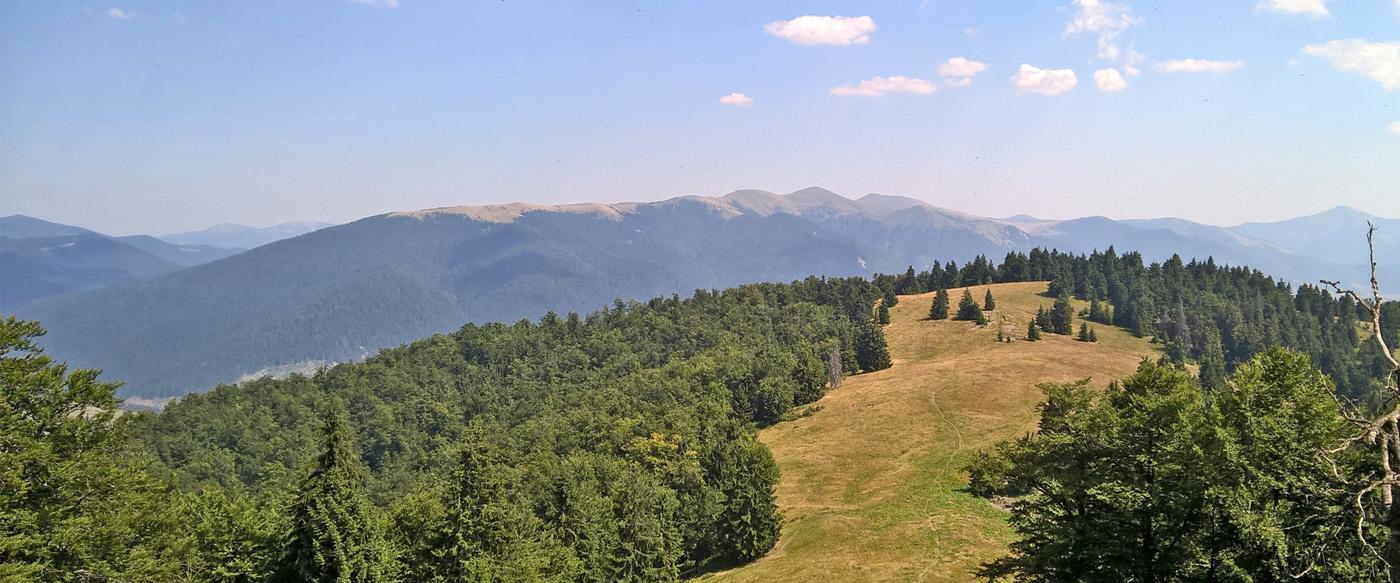 У парку «Синевир» з'явилася Вовча долина