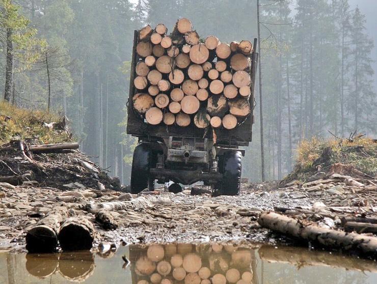 Окремі відділи поліції роками не помічали, як вирубують дерева, а деревину вивозять фурами. Фото з сайту slovoidilo.ua