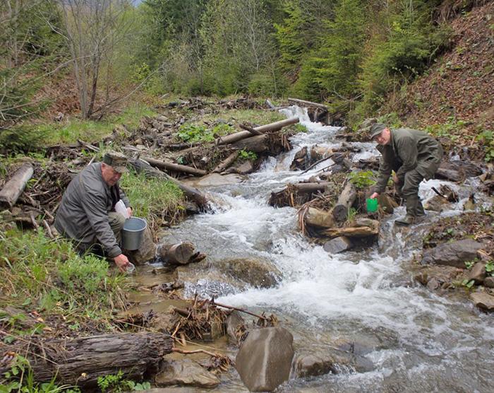 Зариблюють потік в околицях села Лопухів на Тячівщині. Фото автора